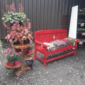Large selection of Summer bedding plants & perennials